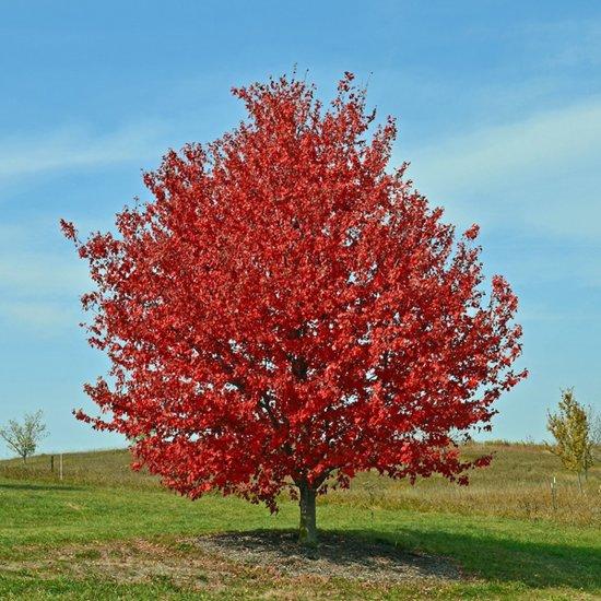 Hedendaags Vergelijk snelgroeiende bomen | Tuinen JK OE-29