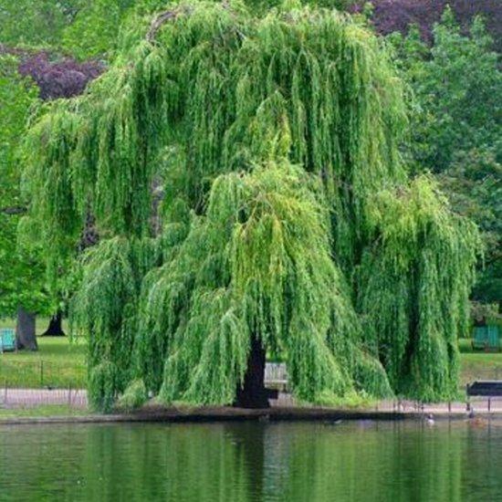 Uitgelezene Vergelijk snelgroeiende bomen | Tuinen JK EH-82