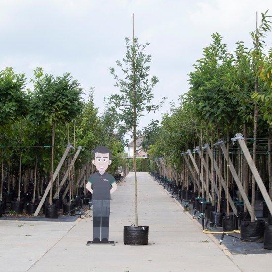 Ongebruikt Vergelijk snelgroeiende bomen | Tuinen JK DO-01